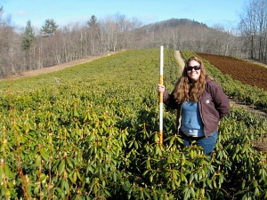 Shelby in the infinity field of Hybrid Rhododendron