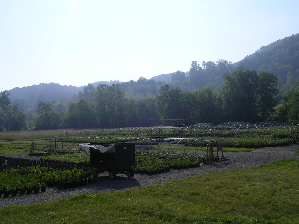 The nursery is located in beautiful Burnsville, NC. Come visit!